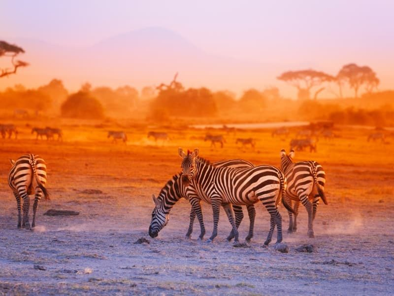 Le Kenya, une destination de choix pour les amoureux du trek et des animaux sauvages