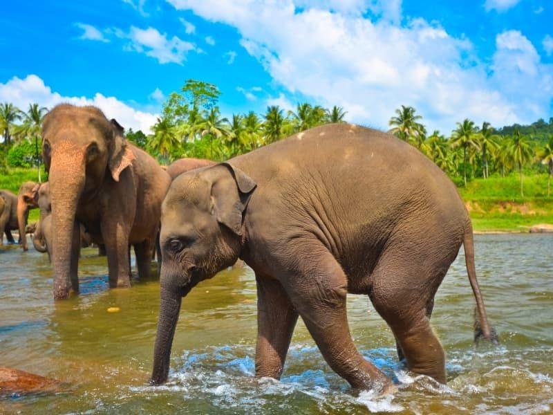 Séjour au Sri Lanka, une île envoûtante à explorer