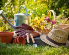 Conseils pour obtenir un magnifique jardin